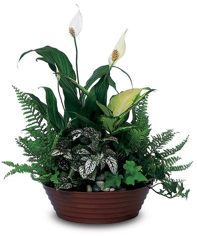 Give the gift of a plant that will continue to give joy throughout the year!
