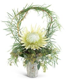 Wild Child Protea